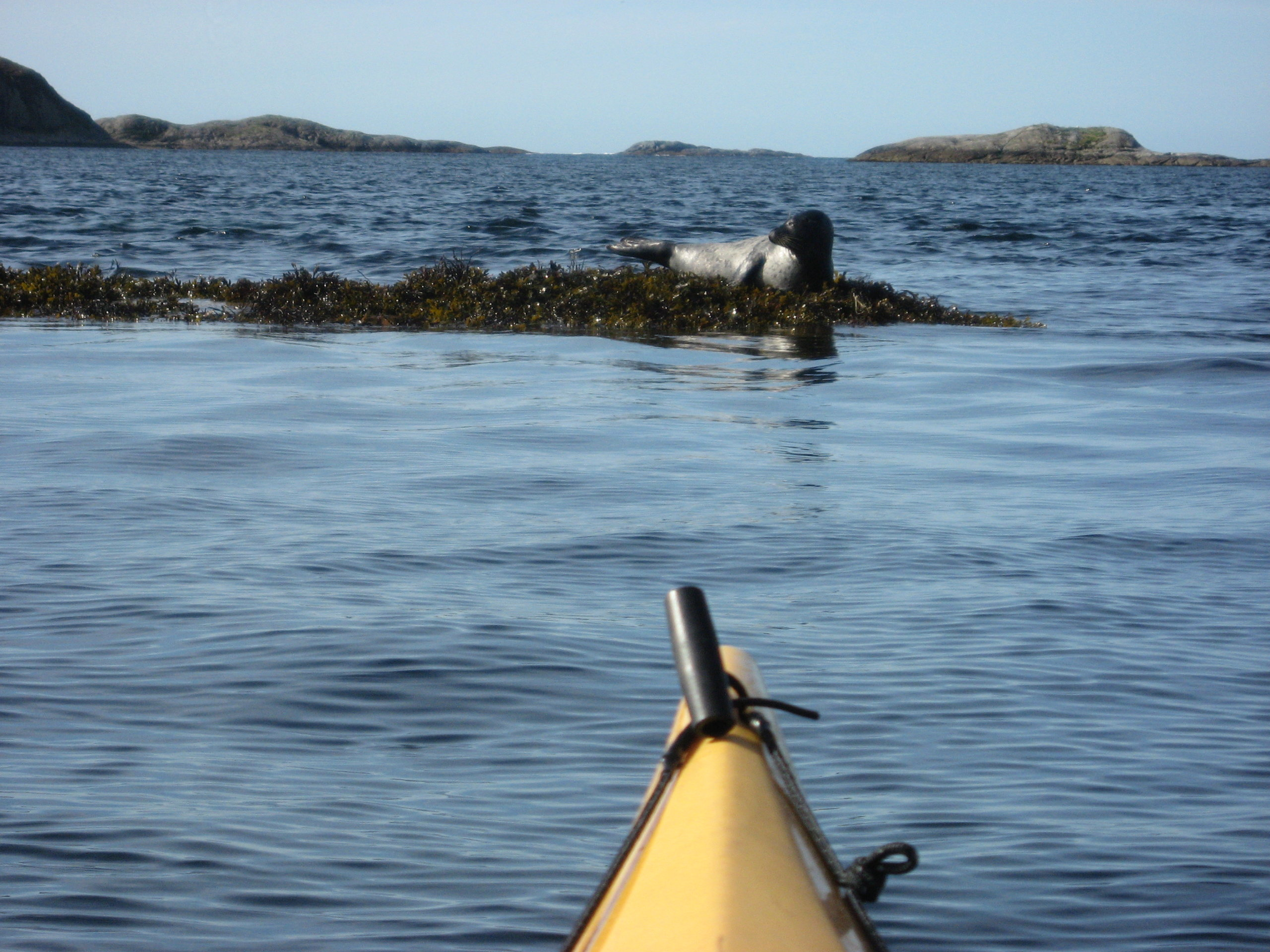 Spotting a seal during the kayak trip