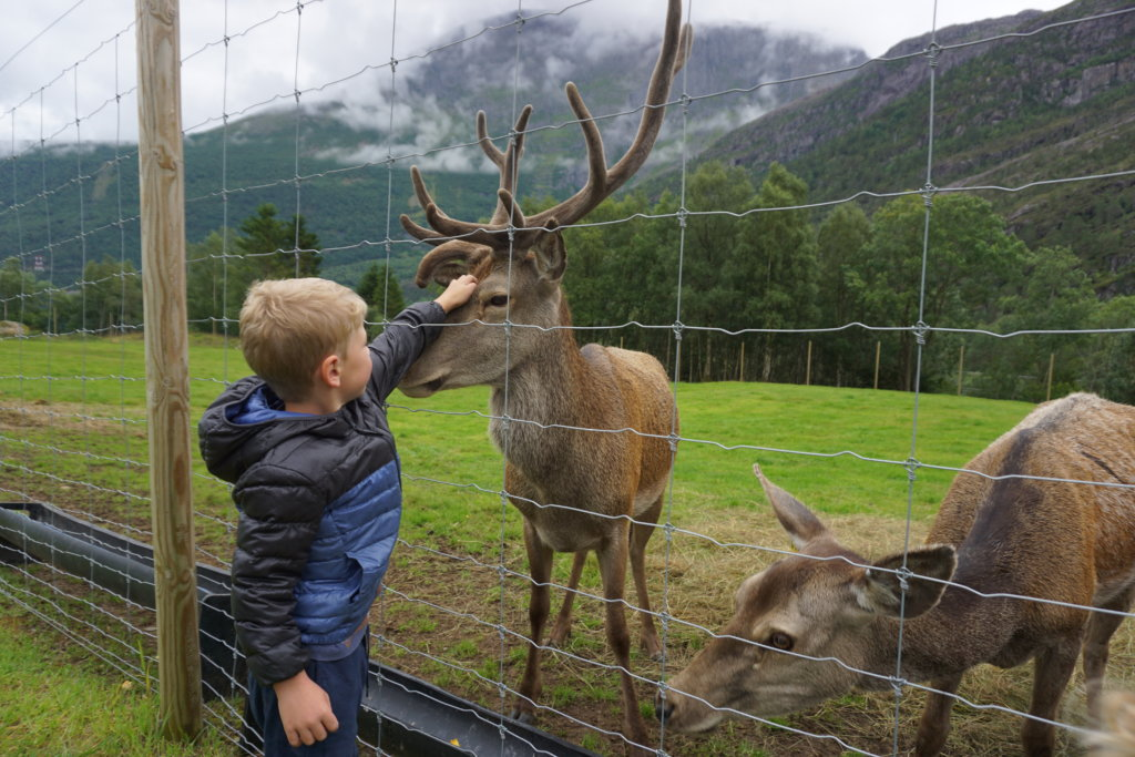 Visit the Deerfarm at Nordfjord