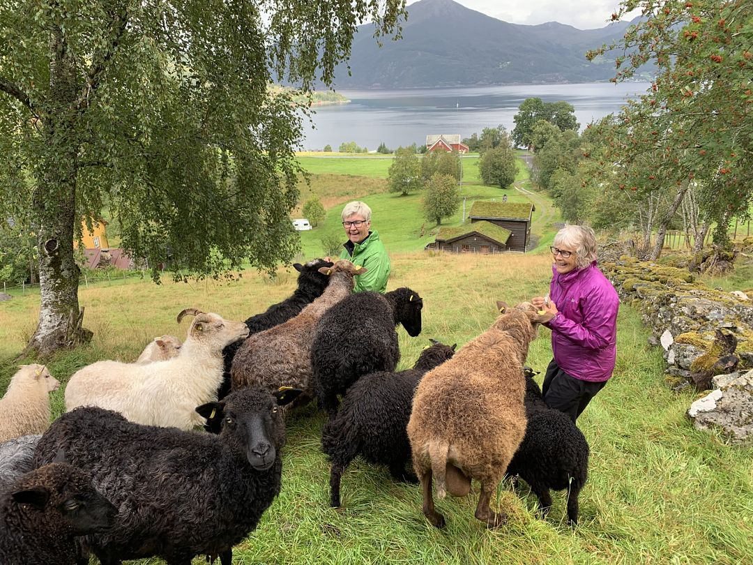 Historic sheep farm visit at our farm, Davik. Norway Adventures vacation