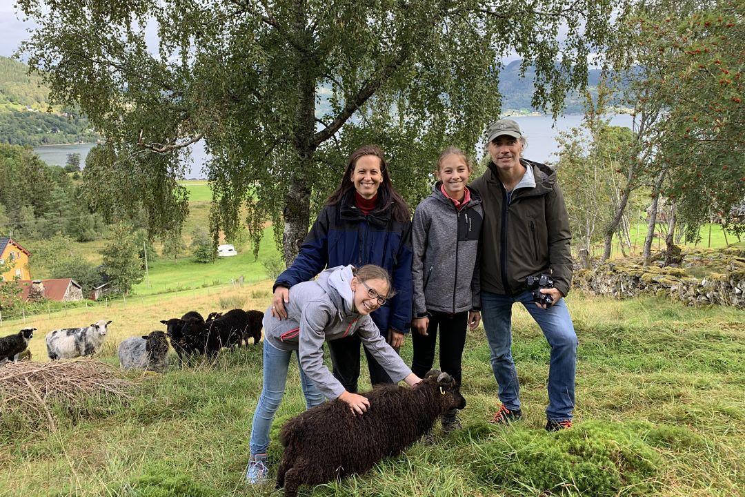 Sheep farm visit, Davik